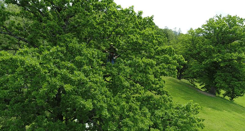Baumpfeger pflegt die Krone eines Baumes