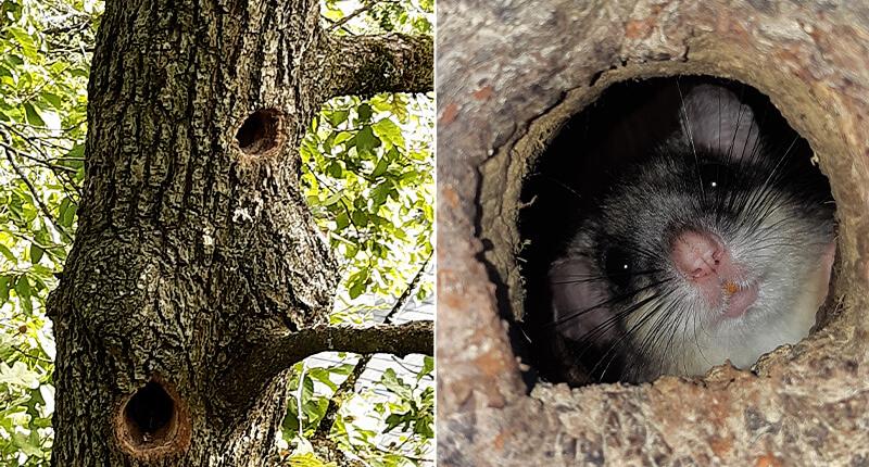 Baum nach tierischen Bewohner kontrollieren